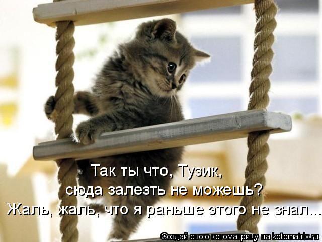 Котоматрица: Так ты что, Тузик, сюда залезть не можешь?  Жаль, жаль, что я раньше этого не знал...