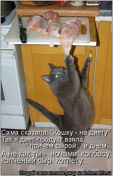 """Котоматрица: Так я диет-продукт взяла.  Сама сказала: """"Кошку - на диету"""" причем сырой... и днём. А не как ты -  ночами: колбасу, копчёный сыр, котлету..."""