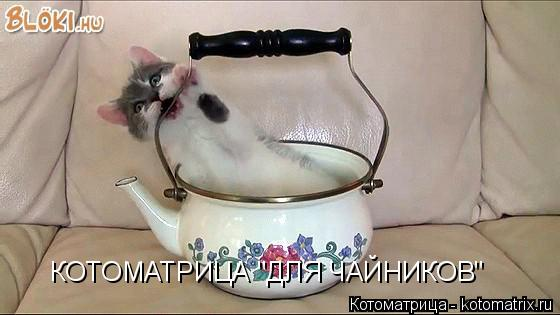 "Котоматрица: КОТОМАТРИЦА ""ДЛЯ ЧАЙНИКОВ"""