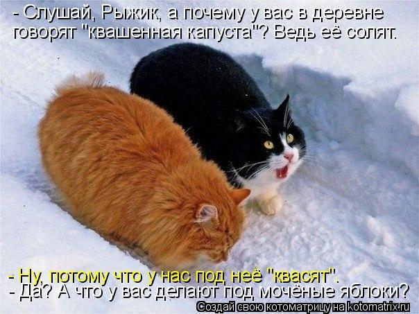 http://kotomatrix.ru/images/lolz/2015/01/29/kotomatritsa_7w.jpg