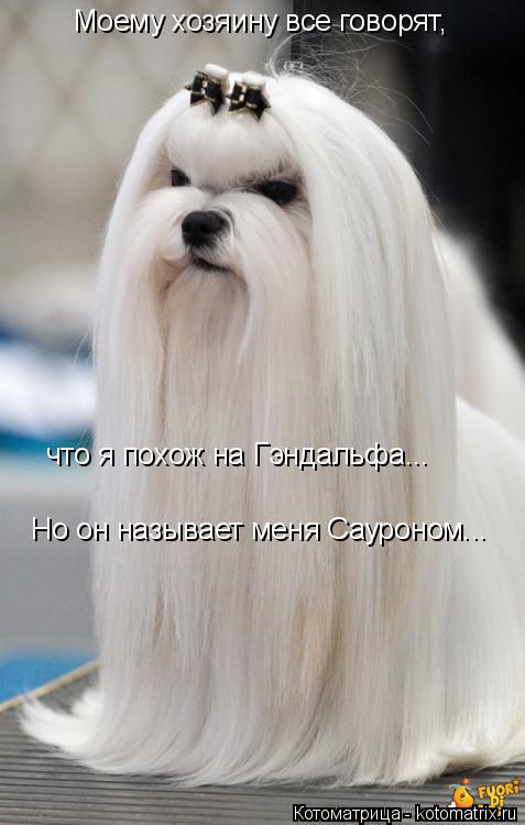 Котоматрица: Моему хозяину все говорят, что я похож на Гэндальфа... Но он называет меня Сауроном...