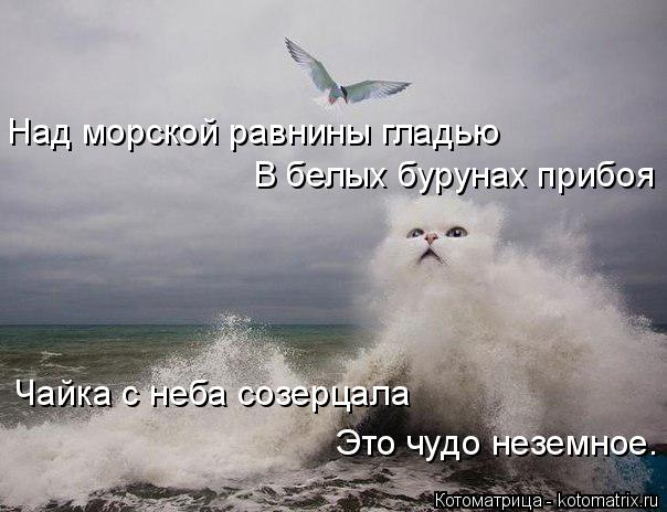 Котоматрица: Над морской равнины гладью В белых бурунах прибоя Чайка с неба созерцала Это чудо неземное.