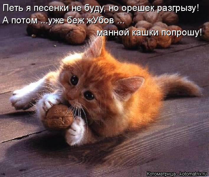 Котоматрица: Петь я песенки не буду, но орешек разгрызу! А потом ...уже беж жУбов ... манной кашки попрошу!
