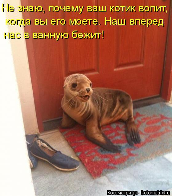 Котоматрица: Не знаю, почему ваш котик вопит, когда вы его моете. Наш вперед нас в ванную бежит!