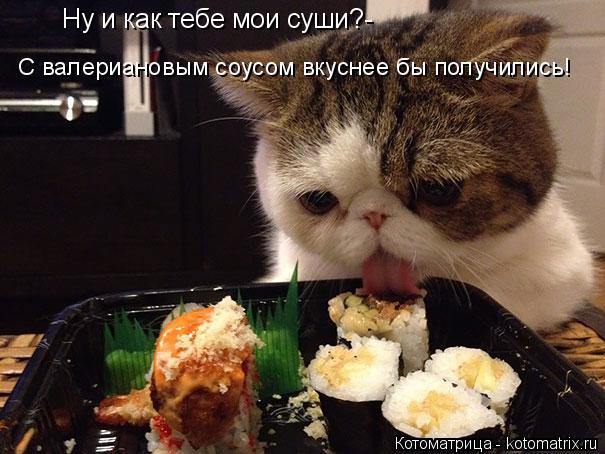 Котоматрица: Ну и как тебе мои суши?- С валериановым соусом вкуснее бы получились!