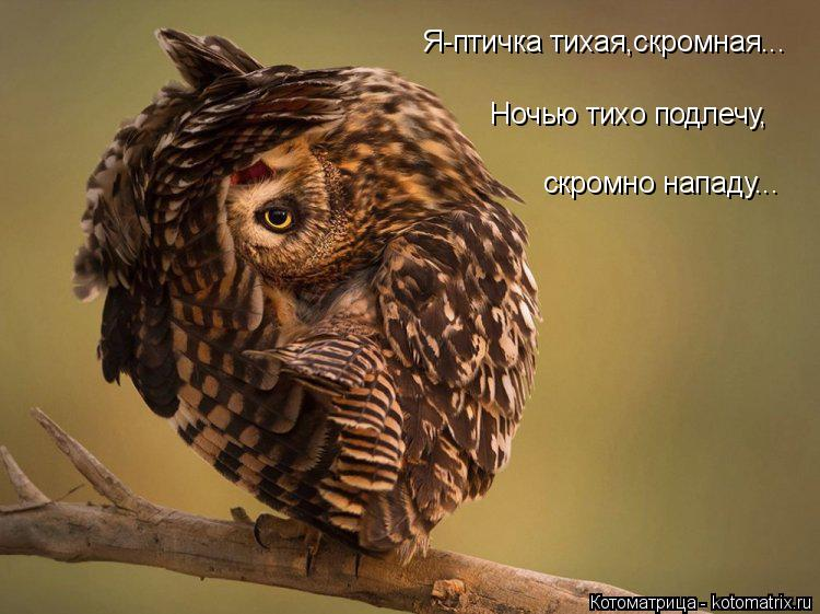 Котоматрица: Я-птичка тихая,скромная... Ночью тихо подлечу, скромно нападу...