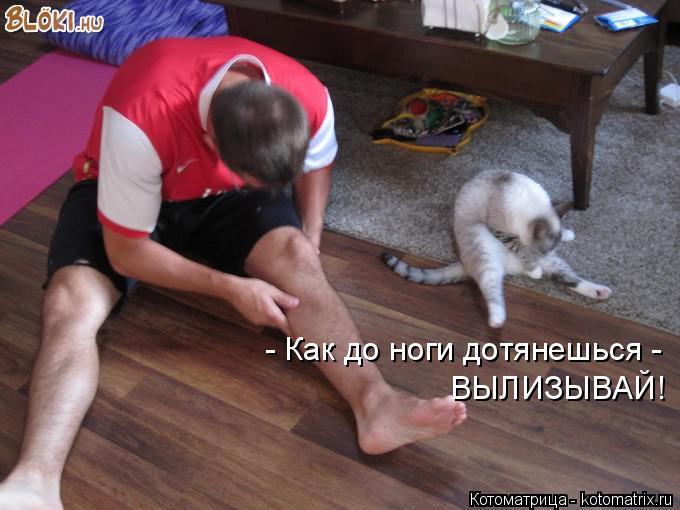 Котоматрица: - Как до ноги дотянешься -  ВЫЛИЗЫВАЙ!
