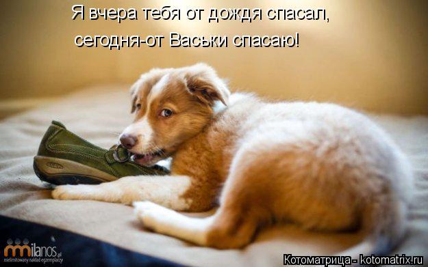 Котоматрица: Я вчера тебя от дождя спасал, сегодня-от Васьки спасаю!