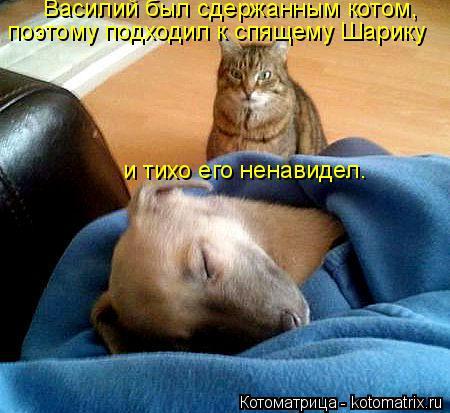 Котоматрица: Василий был сдержанным котом, поэтому подходил к спящему Шарику и тихо его ненавидел.