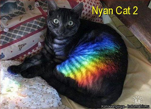Котоматрица: Nyan Cat 2