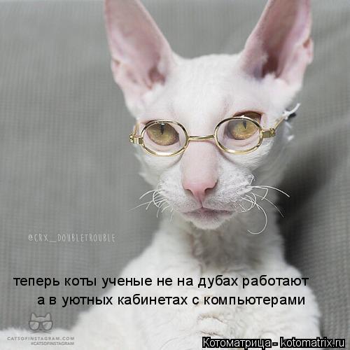 Котоматрица: теперь коты ученые не на дубах работают а в уютных кабинетах с компьютерами