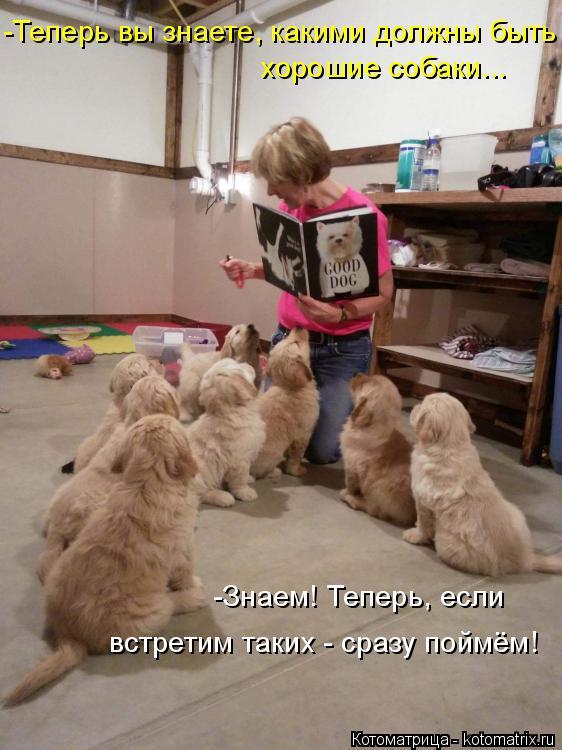 Котоматрица: -Теперь вы знаете, какими должны быть хорошие собаки... -Знаем! Теперь, если  встретим таких - сразу поймём!