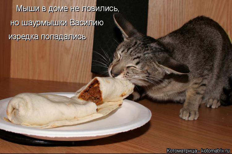 Котоматрица: Мыши в доме не ловились,  но шаурмышки Василию изредка попадались