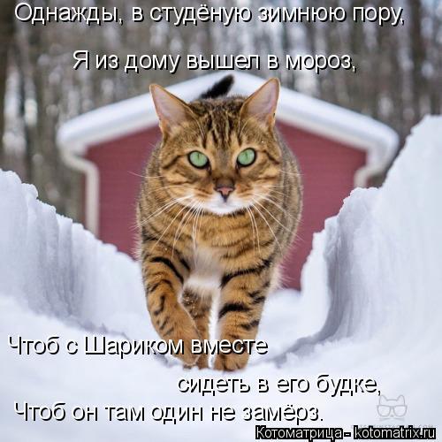 Котоматрица: Однажды, в студёную зимнюю пору, Я из дому вышел в мороз, Чтоб с Шариком вместе сидеть в его будке, Чтоб он там один не замёрз.