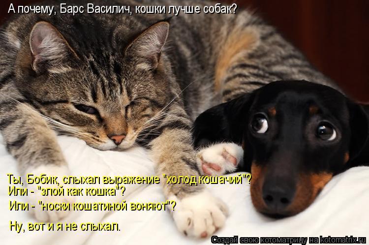 """Котоматрица: А почему, Барс Василич, кошки лучше собак? Ты, Бобик, слыхал выражение """"холод кошачий""""? Или - """"злой как кошка""""? Или - """"носки кошатиной воняют""""? Ну,"""