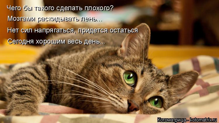 Котоматрица: Чего бы такого сделать плохого? Мозгами раскидывать лень... Нет сил напрягаться, придется остаться Сегодня хорошим весь день...