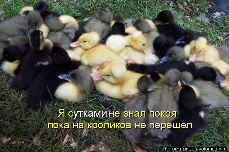 Котоматрица: утками Я с            не знал покоя пока на кроликов не перешел