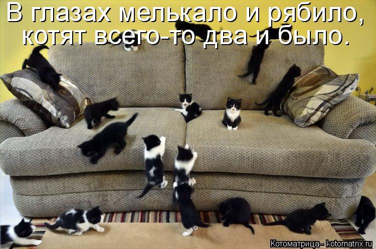 Котоматрица: В глазах мелькало и рябило, котят всего-то два и было.