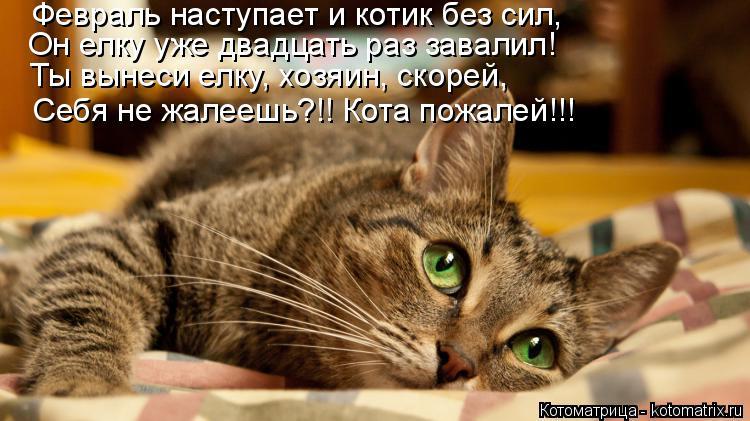 Котоматрица: Февраль наступает и котик без сил, Он елку уже двадцать раз завалил! Ты вынеси елку, хозяин, скорей, Себя не жалеешь?!! Кота пожалей!!!