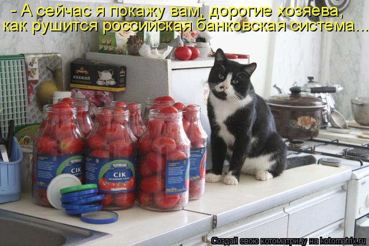 Котоматрица: - А сейчас я покажу вам, дорогие хозяева, как рушится российская банковская система...