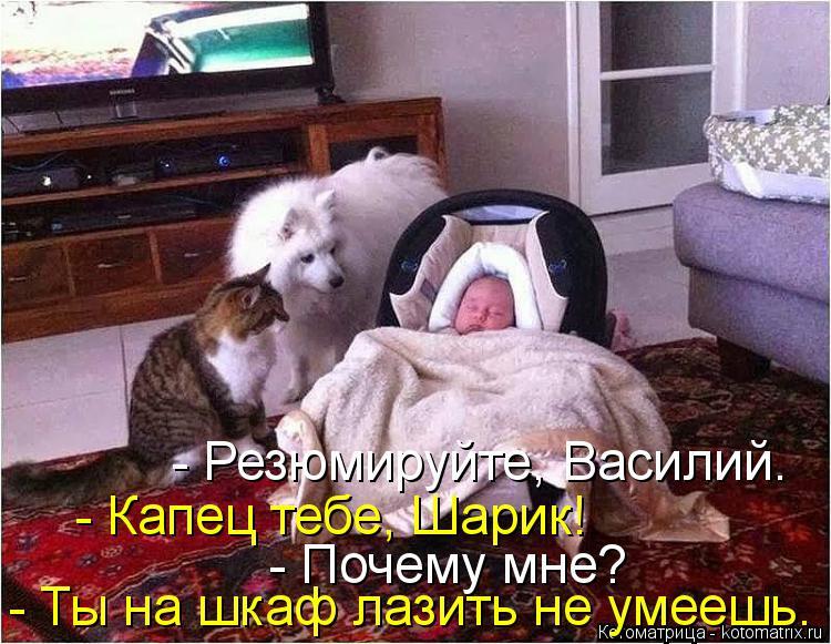 Котоматрица: - Резюмируйте, Василий. - Капец тебе, Шарик! - Почему мне? - Ты на шкаф лазить не умеешь.