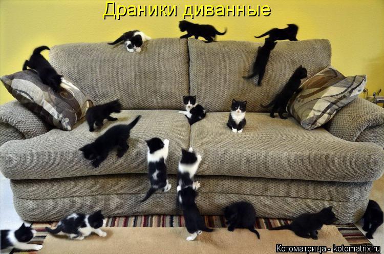 Котоматрица: Драники диванные