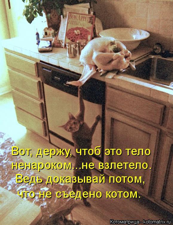 Котоматрица: Вот, держу, чтоб это тело ненароком...не взлетело. Ведь доказывай потом,  что не съедено котом.