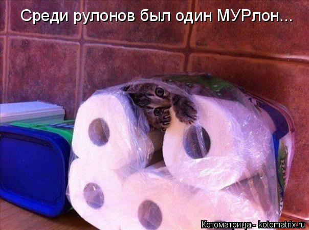 Котоматрица: Среди рулонов был один МУРлон...