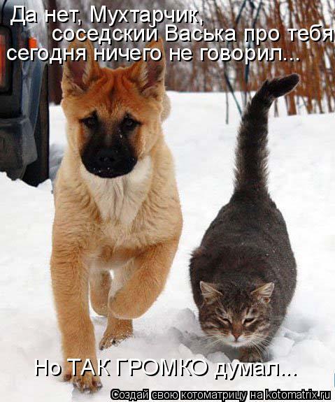 Котоматрица: Да нет, Мухтарчик,  соседский Васька про тебя сегодня ничего не говорил... Но ТАК ГРОМКО думал...