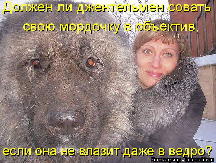 В Нижнем Новгороде зоосадисты