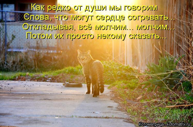 Котоматрица: Как редко от души мы говорим Слова, что могут сердце согревать... Откладывая, всё молчим... молчим... Потом их просто некому сказать...