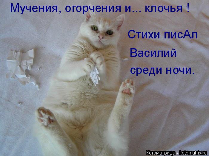 Котоматрица: Стихи писАл  Василий среди ночи. Мучения, огорчения и... клочья !
