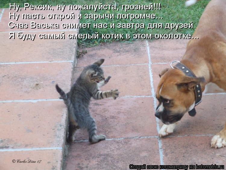 Котоматрица: Ну, Рексик, ну пожалуйста, грозней!!!  Ну пасть открой и зарычи погромче... Счаз Васька снимет нас и завтра для друзей Я буду самый смелый котик