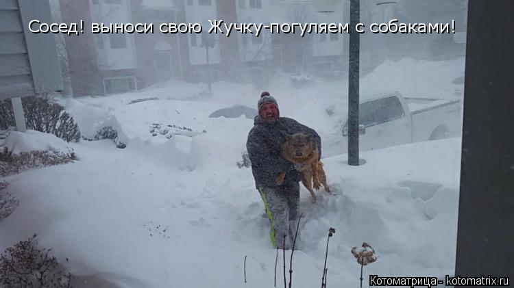Котоматрица: Сосед! выноси свою Жучку-погуляем с собаками!