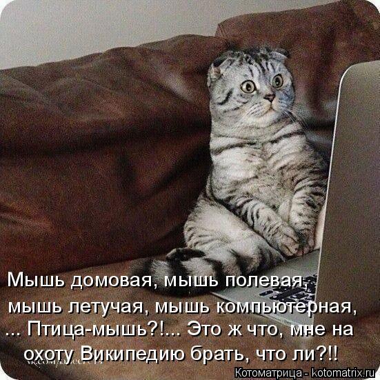 http://kotomatrix.ru/images/lolz/2015/02/03/kotomatritsa_MS.jpg
