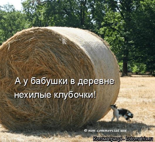 Котоматрица: А у бабушки в деревне нехилые клубочки!