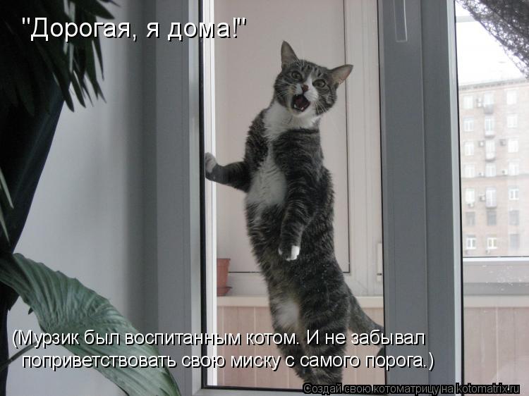 """Котоматрица: """"Дорогая, я дома!"""" (Мурзик был воспитанным котом. И не забывал  поприветствовать свою миску с самого порога.)"""