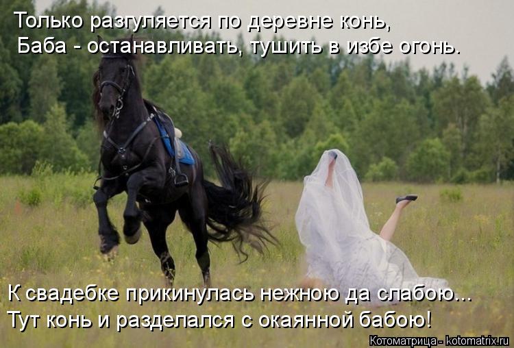 Котоматрица: Только разгуляется по деревне конь, Баба - останавливать, тушить в избе огонь. К свадебке прикинулась нежною да слабою... Тут конь и разделал