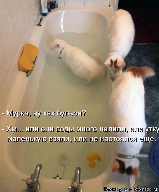 Котоматрица: - Мурка, ну как бульон? - Хм... или они воды много налили, или утку маленькую взяли, или не настоялся еще.