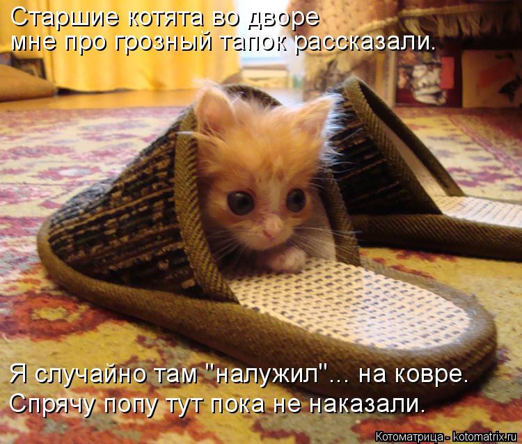 """Котоматрица: Старшие котята во дворе мне про грозный тапок рассказали. Я случайно там """"налужил""""... на ковре. Спрячу попу тут пока не наказали."""