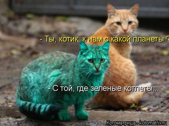Котоматрица: - Ты, котик, к нам с какой планеты ? - С той, где зеленые котлеты...