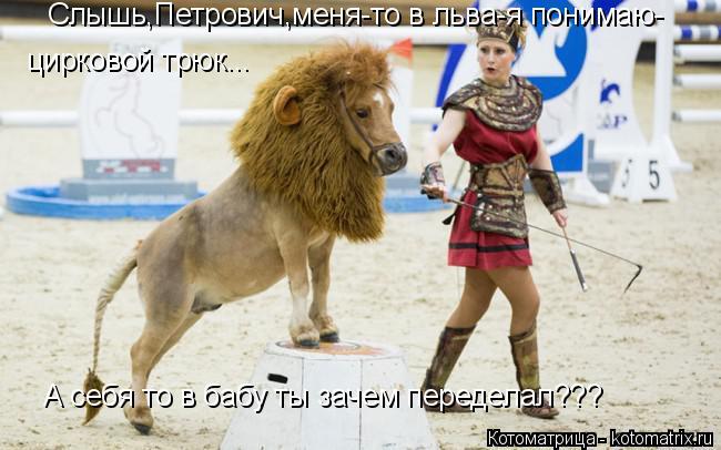 Котоматрица: Слышь,Петрович,меня-то в льва-я понимаю- цирковой трюк... А себя то в бабу ты зачем переделал???