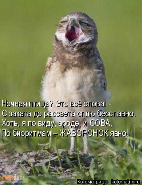 Котоматрица: Ночная птица? Это всё слова! - С заката до рассвета сплю бесславно. Хоть, я по виду, вроде, и СОВА, По биоритмам – ЖАВОРОНОК явно!