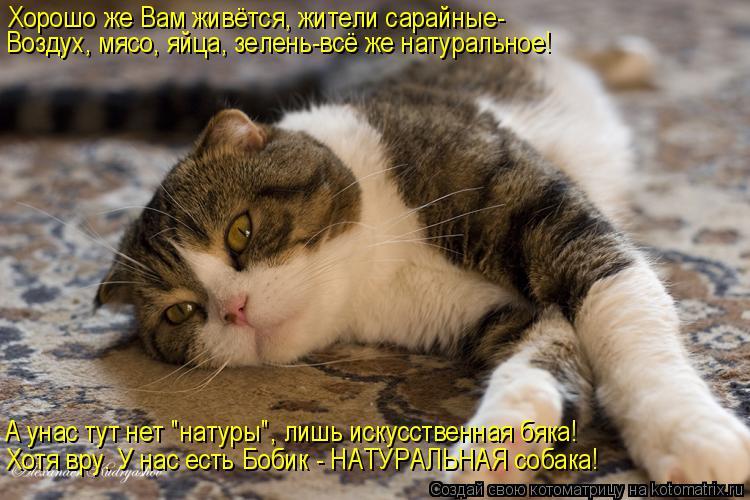http://kotomatrix.ru/images/lolz/2015/02/04/kotomatritsa_y.jpg