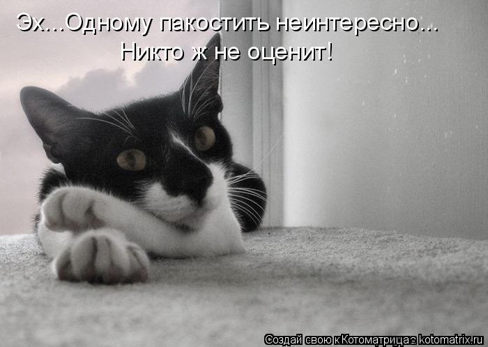 http://kotomatrix.ru/images/lolz/2015/02/05/kotomatritsa_-c.jpg