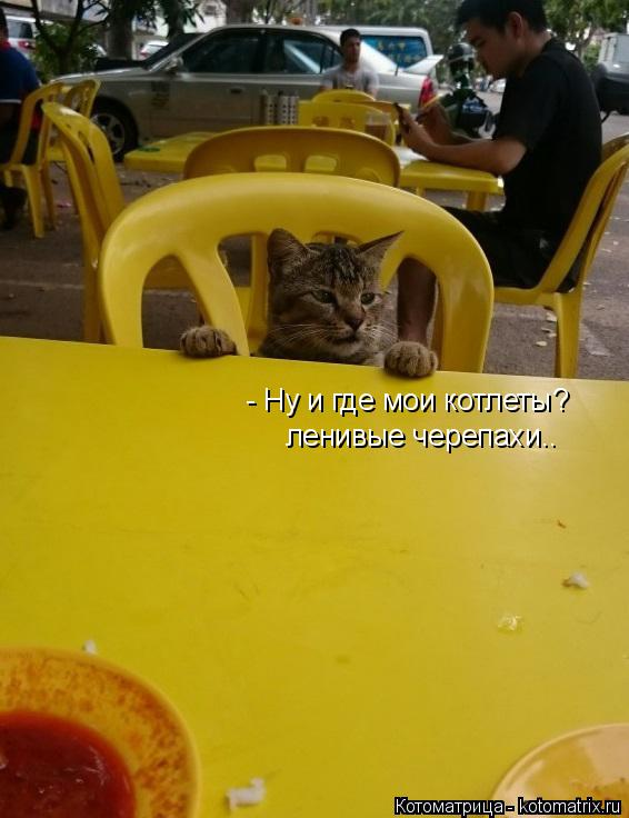 Котоматрица: - Ну и где мои котлеты? ленивые черепахи..