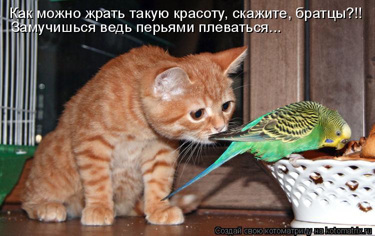 Котоматрица: Как можно жрать такую красоту, скажите, братцы?!! Замучишься ведь перьями плеваться...