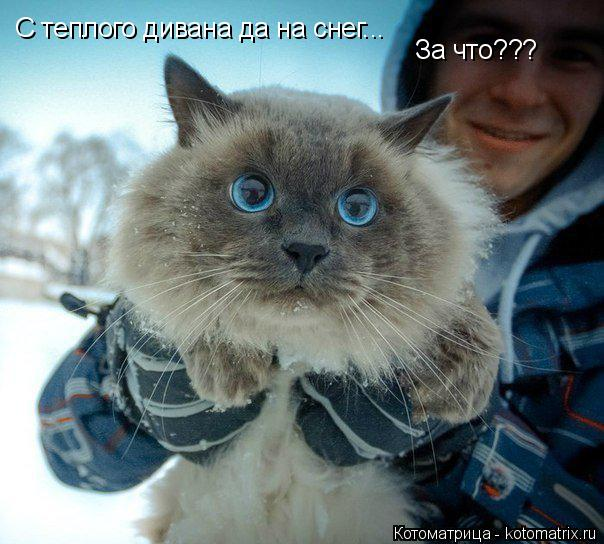 Котоматрица: C теплого дивана да на снег... За что???