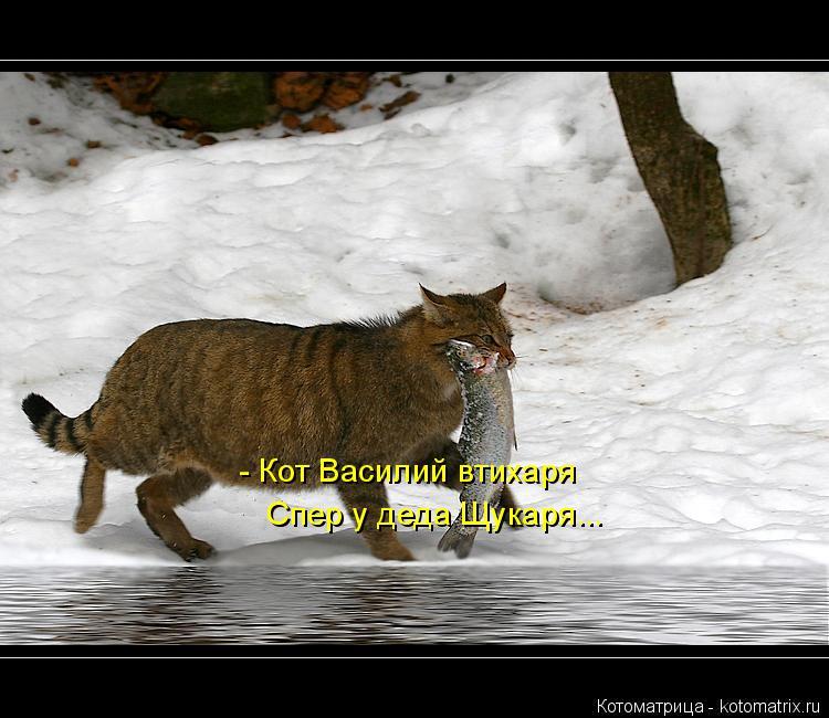 Котоматрица: - Кот Василий втихаря Спер у деда Щукаря...