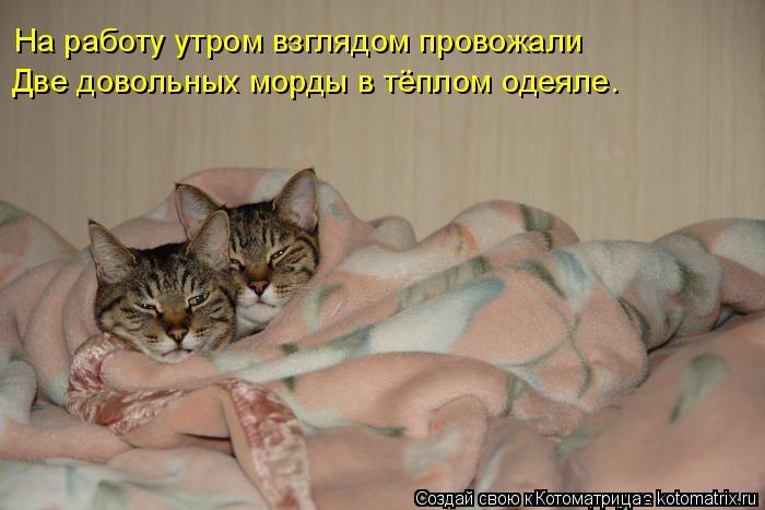 Котоматрица: Две довольных морды в тёплом одеяле. На работу утром взглядом провожали